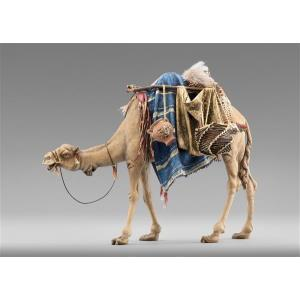 Dromedary with bags for King